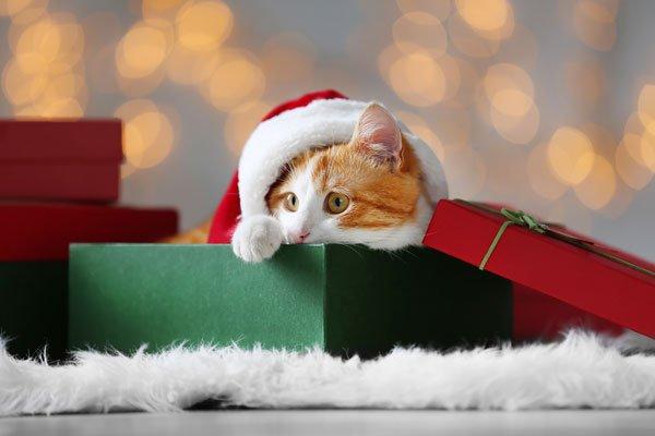 a cat in a santa hat sits in a gift box