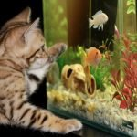 kitten with paw on a fish tank